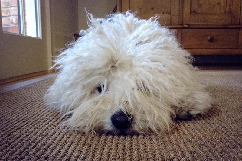 Beast on Carpet