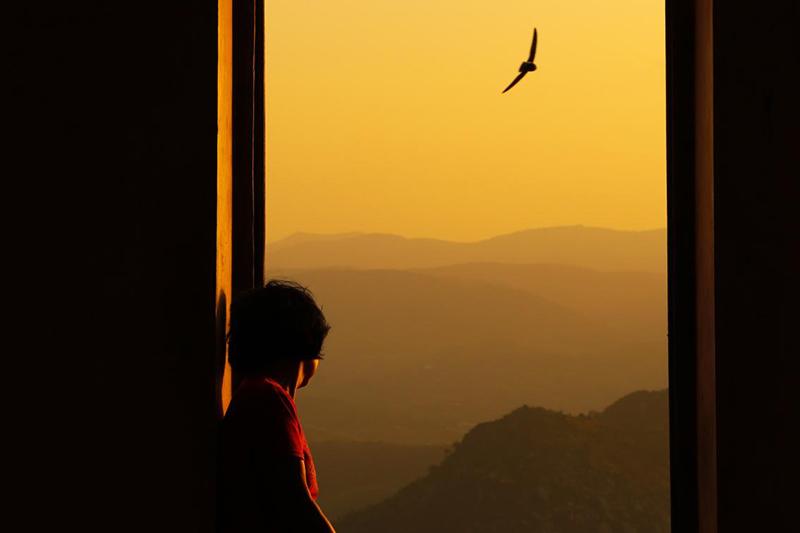 Bird out window