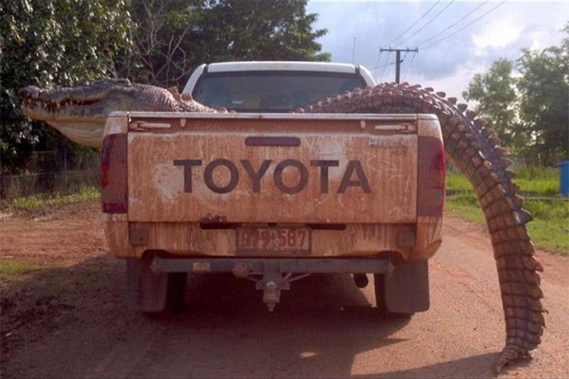 Croc in Toyota