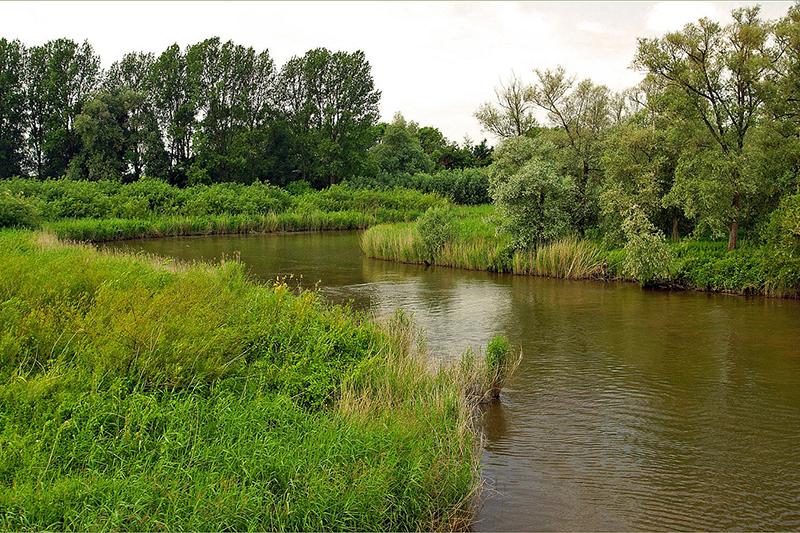 National Park 'Biesbosch'