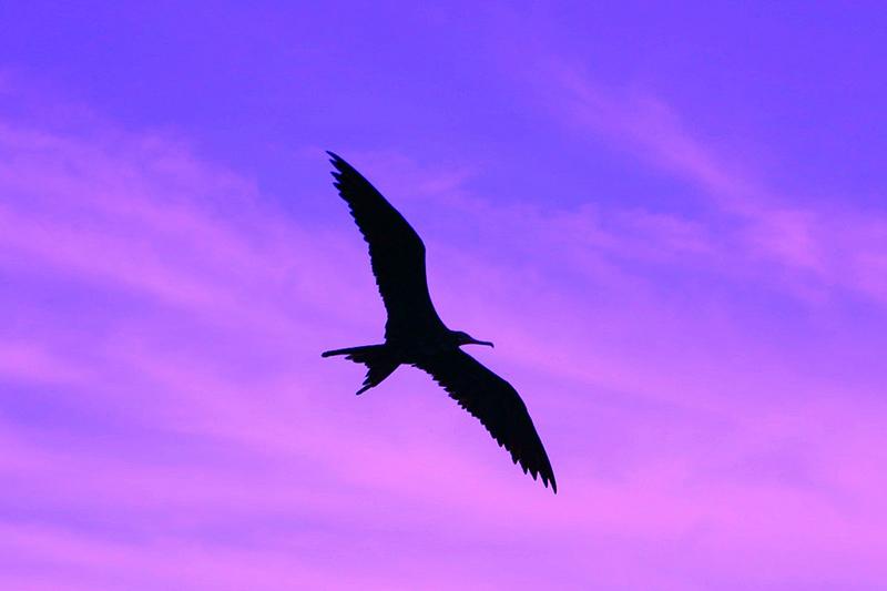 Purple eagle ... I mean Antigua and purple sky